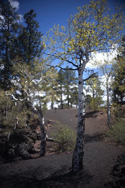 aspen volcano arizona