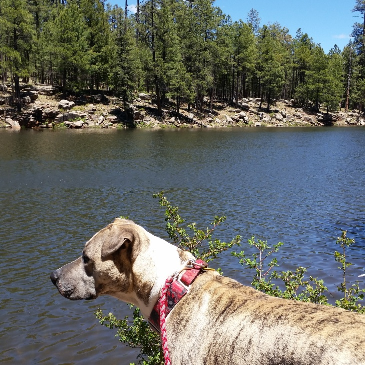 Axl at Woods Canyon in Arizona
